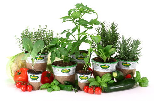 Lowes buy one get one free seeds plants moms need to know - Flowers not to plant with vegetables ...