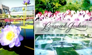 Groupon Half Price Tickets To Longwood Gardens Moms Need To Know