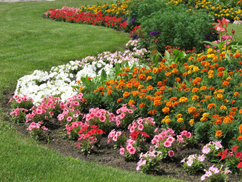 How to Have a Beautiful Flowerbed in 3 Easy Steps | Moms