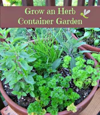 How to grow an herb container garden moms need to know for Container herb garden