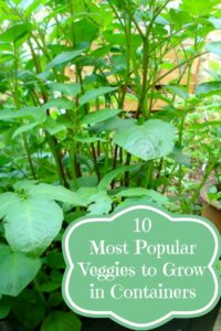 10 Most Popular Vegetables to Grow in Containers