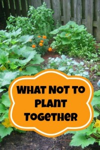 What Not to Plant Together when Gardening