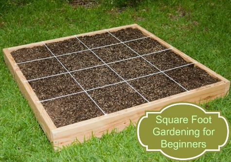 Getting Started With Square Foot Gardening