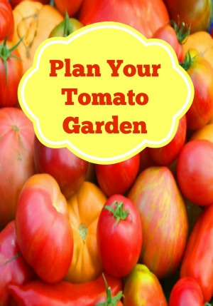 Time to Plan Your Tomato Garden