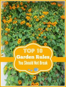 Top 10 Gardening Rules That You Should Never Break!