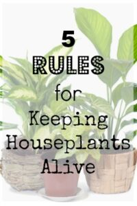 As we start to think about bringing in some of the plants from outside, here is how to keep them alive!