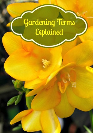 Gardening Terms Explained For You