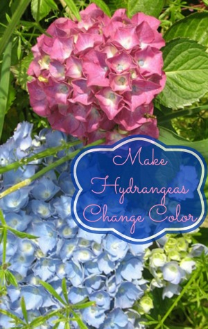 How To Make Hydrangeas Change Color