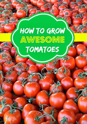 Learn How to Grow Awesome Tomatoes