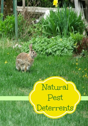 Natural Pest Deterrents For Your Garden