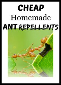 Cheap Homemade Ant Repellents