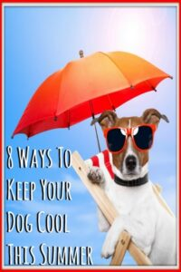 8 Ways To Keep Your Dog Cool This Summer