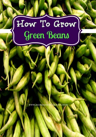 Learn How to Grow Green Beans