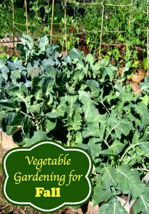 Ideas for Vegetable Gardening for Fall
