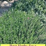 The Best Herbs for a Fall Garden