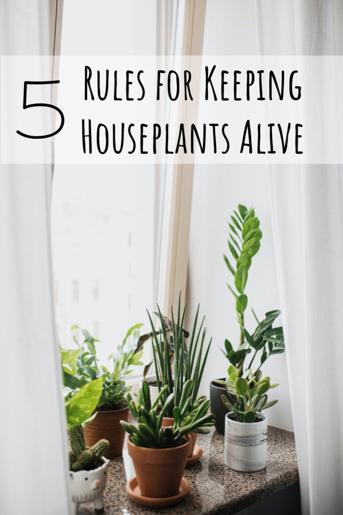 Plants in the home can be both decorative as well as a source of peace and calm. Follow these simple rules for keeping houseplants alive!