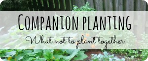 Companion Planting What Not To Plant Together