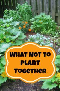 Some plants just don't play very well with each other! Here are the plants you should be planting too close together