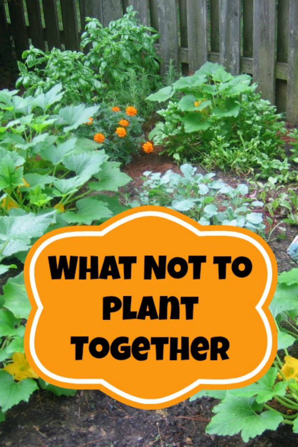 Companion Planting What Not To Plant Together Moms Need To Know
