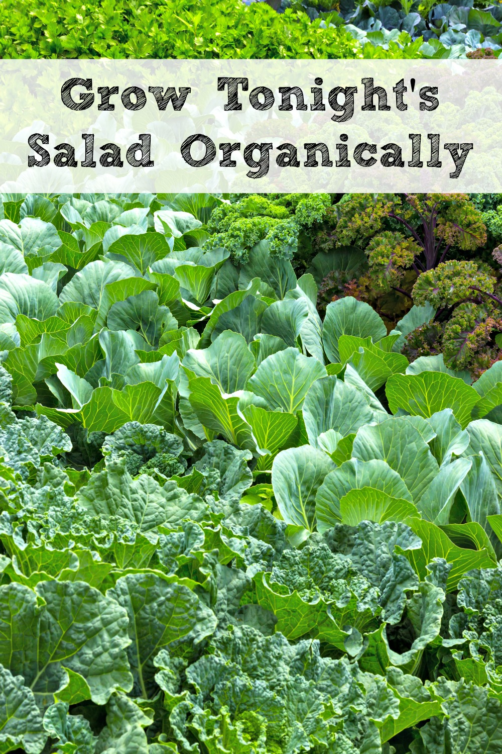 You can grow everything you need for your salads right in your own garden and it is so easy and fun to do!