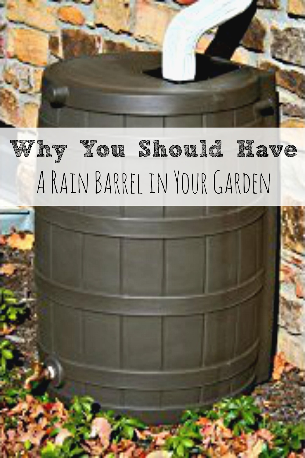 Why You Should Have a Rain Barrel in Your Garden