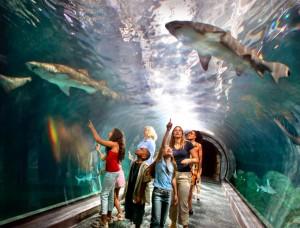 Adventure Aquarium Shark Tunnel
