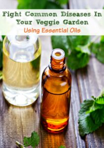 Fight Common Diseases In Your Veggie Garden Using Essential Oils