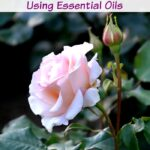 Fight Common Diseases & Pests In Your Flower Garden  Using Essential Oils