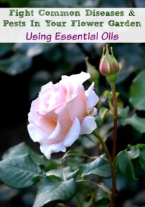 Protect Your Flower Garden From Pests and Disease With Essential Oils