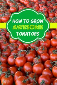 How To Grow Awesome Tomatoes
