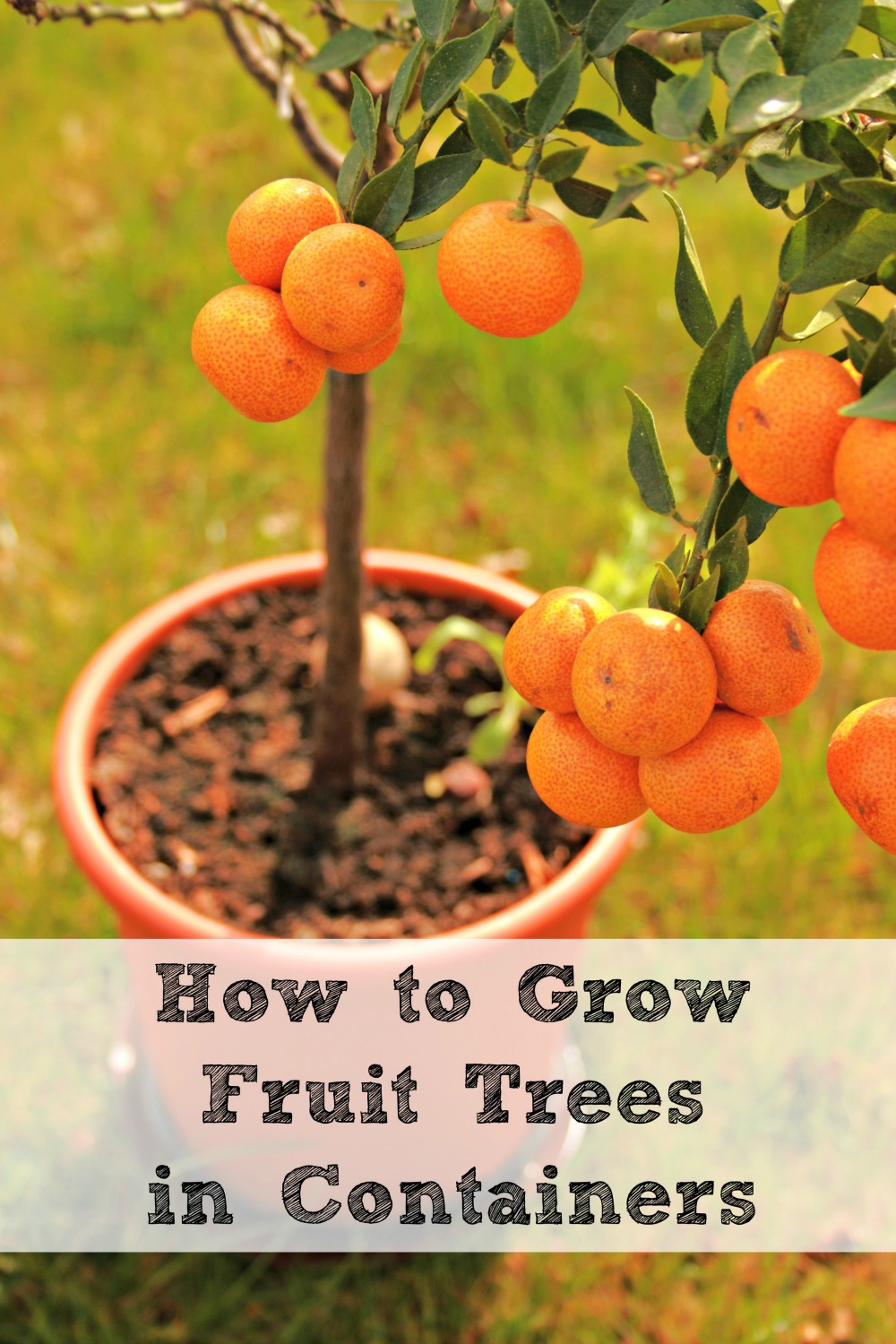 Learn How to Grow Fruit Trees in Containers