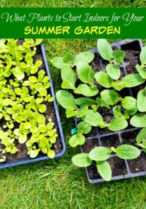 What Plants To Start Now For Your Summer Garden
