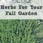 The Best Herbs For Your Fall Garden