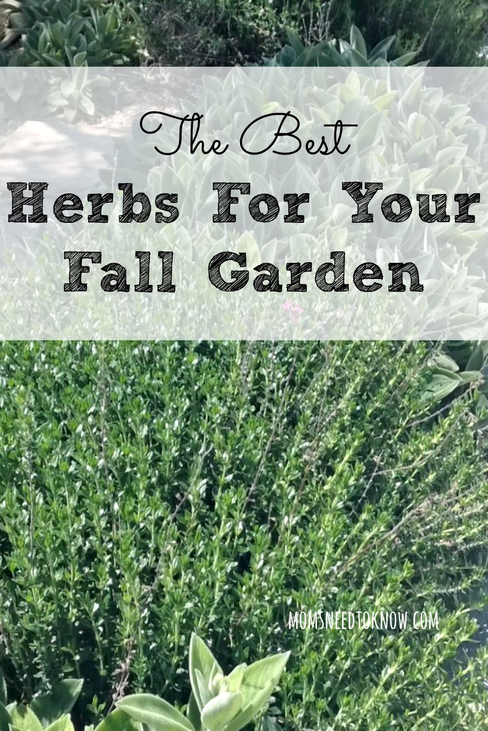plant in your fall garden just because the weather is getting cooler doesnt mean that you cant - Fall Garden Plant