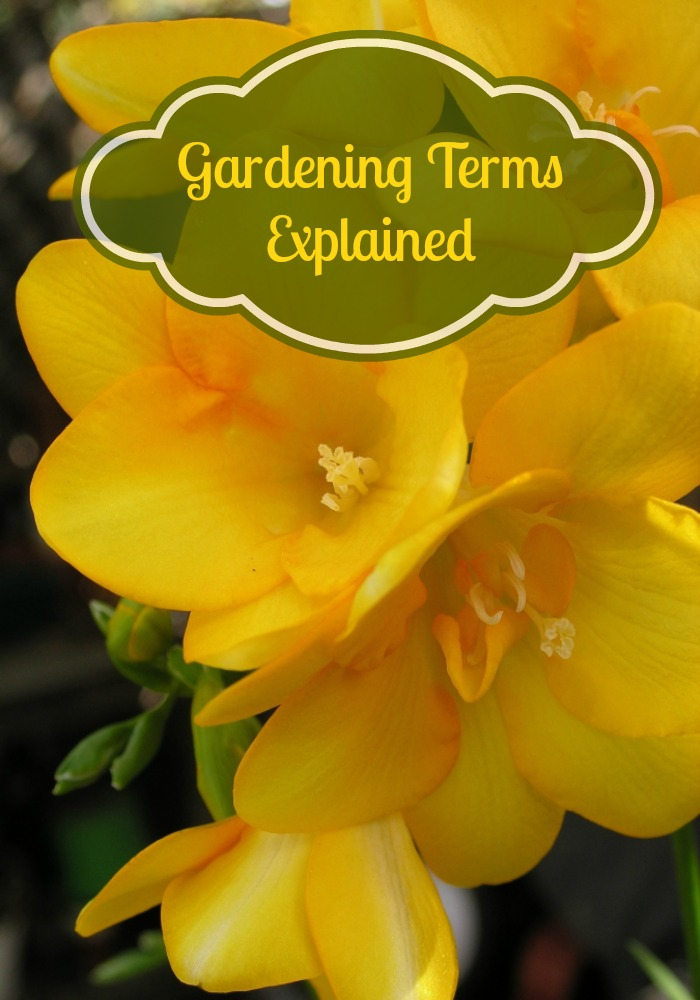 Gardening seems to have its own language. Here is your guide to the language of the garden!