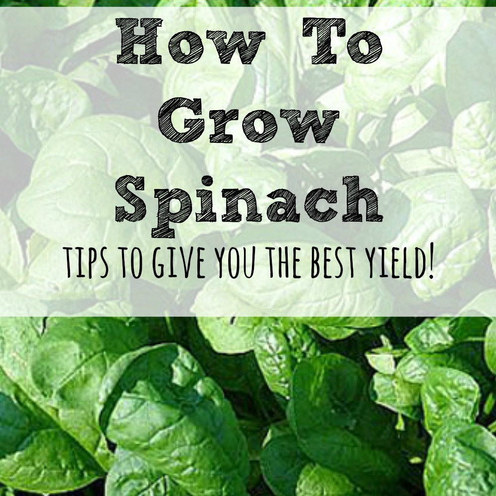 How To Grow A Garden 28 Images How To Grow Spinach